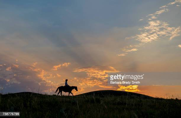 silhouette of caucasian woman riding horse at sunset - lady barbara stock-fotos und bilder