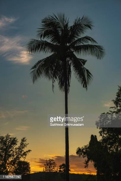 Silhouette Of Coconut Tree Against Sky During Sunrise