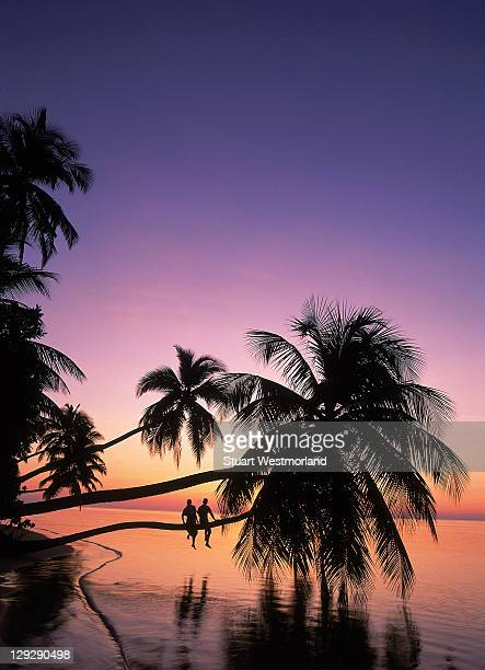 silhouette of couple sitting on a palm tree hanging over beach, sunset