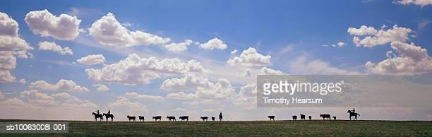 silhouette of cowboys with cows on ridge - timothy hearsum fotografías e imágenes de stock