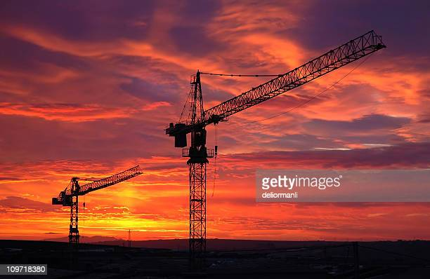 Silhouette of Cranes at Sunset