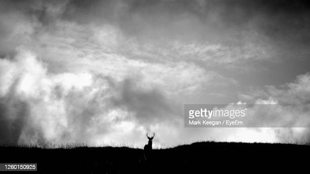 silhouette of deer stag standing on field against sky - stag stock pictures, royalty-free photos & images