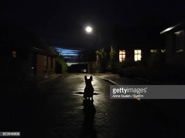 Silhouette Of Dog Sitting On Street At Night