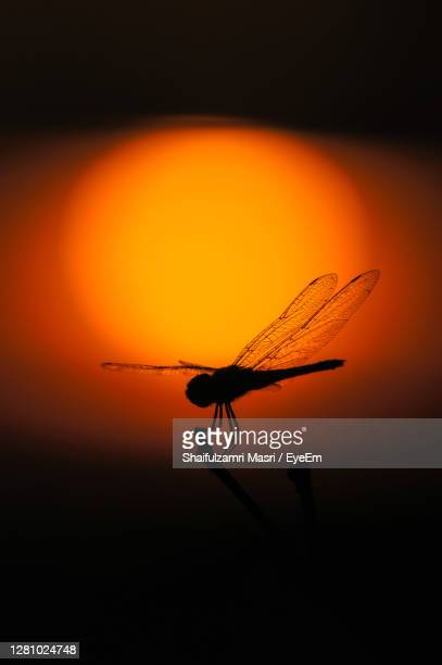 silhouette of dragonfly over sunset. - shaifulzamri stock pictures, royalty-free photos & images