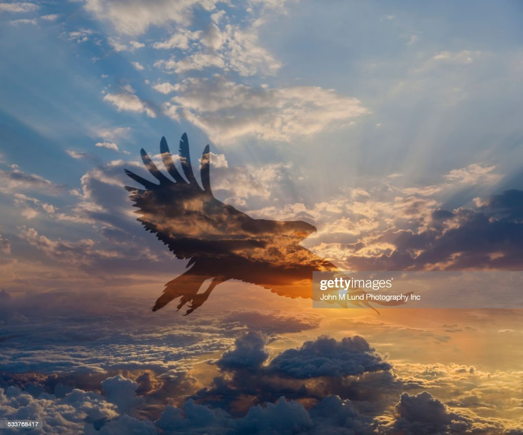 Silhouette of eagle flying in dramatic sunrise sky : Foto stock
