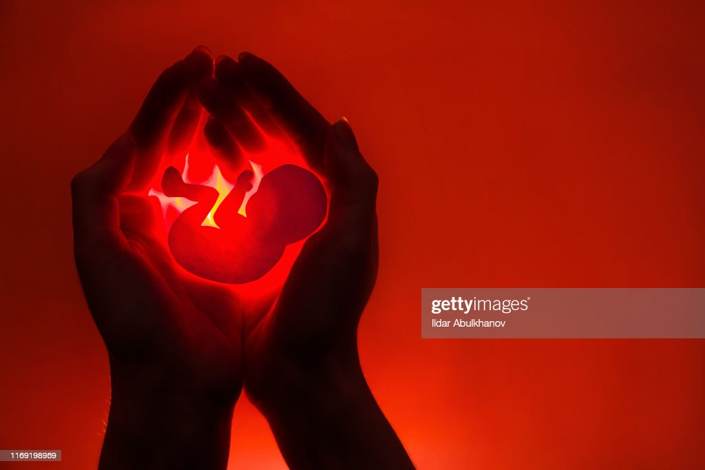 silhouette of female hands holding paper embryo on red background .concept : Stock Photo