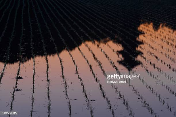silhouette of five story pagoda - präfektur okayama stock-fotos und bilder