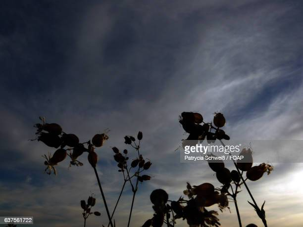 Silhouette of flower against a cloudy sky