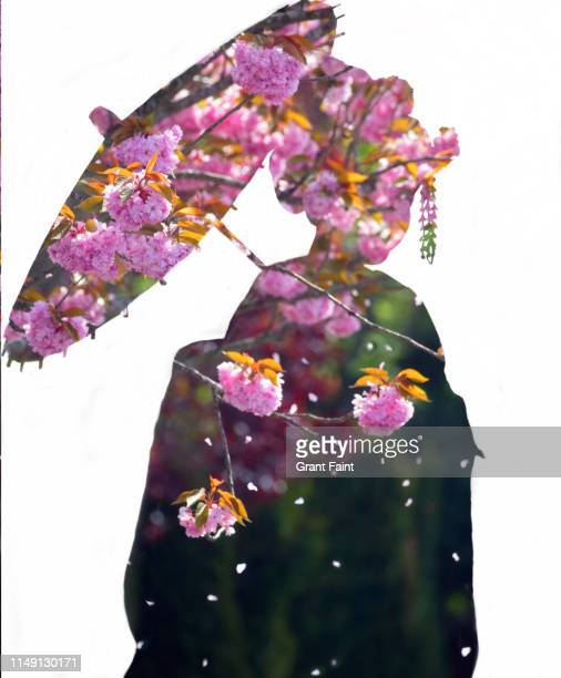 composite image geisha silhouette with cherry