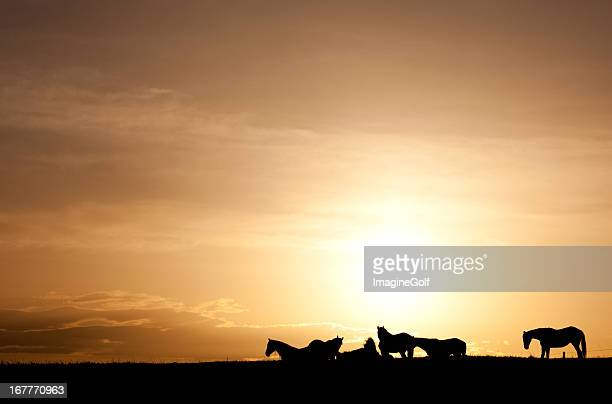 Silhouette of Group of Horses on the Plains