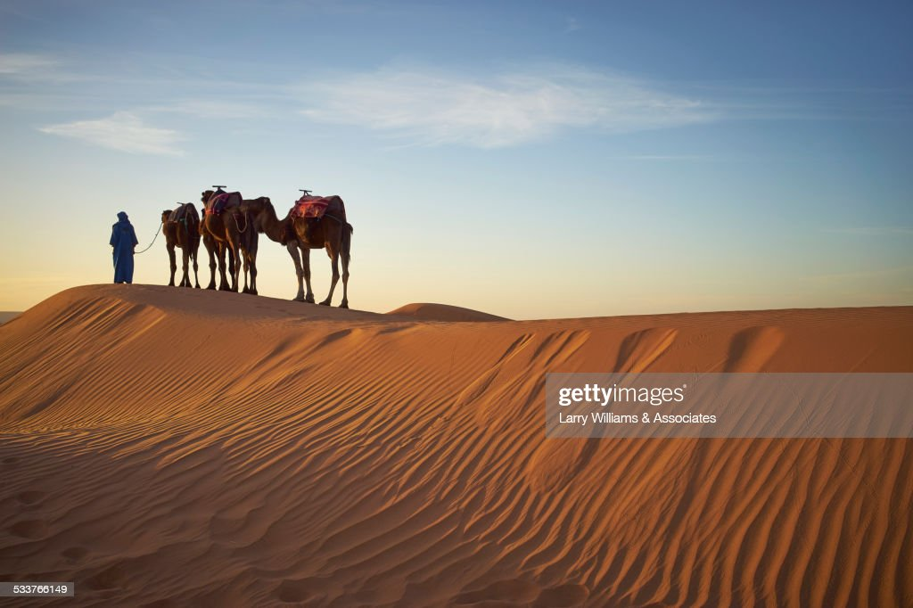 Silhouette of guide with camels on sand dunes in desert landscape : Foto stock