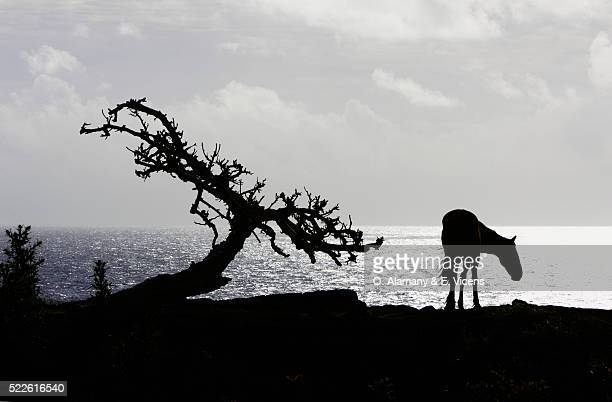 Silhouette of Horse and Tree on Easter Island