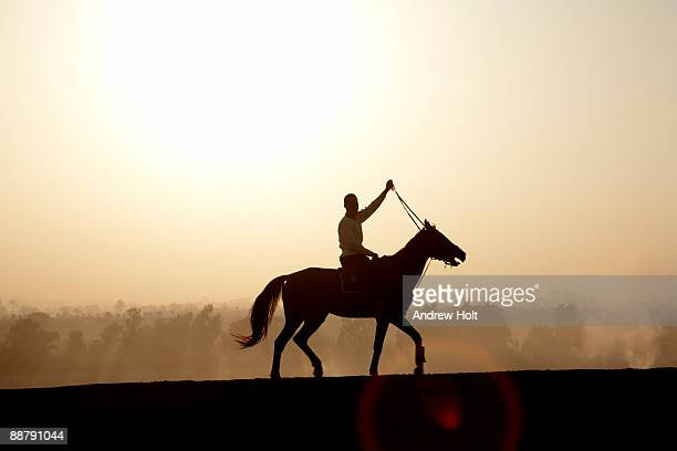 Silhouette of horse rider, Cairo, Egypt.