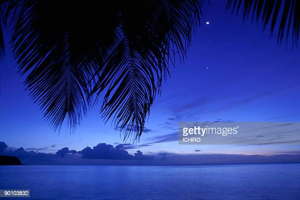 Silhouette of leaves of palm tree on the beach.