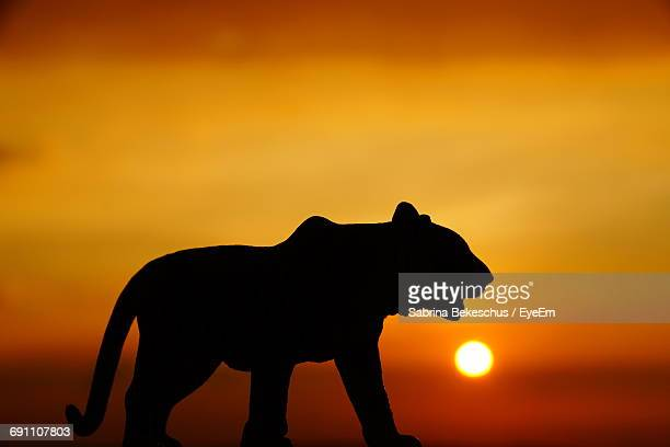 Silhouette Of Lioness At Sunset