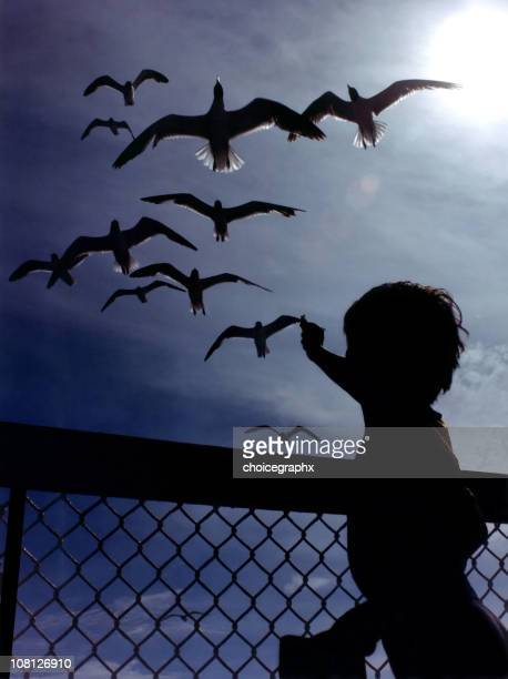 Silhouette of Little Boy Feeding Seagulls