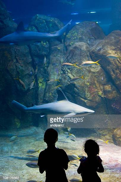 Silhouette of Little Girl and Boy Looking at Sharks