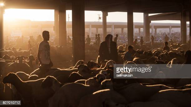 silhouette of livestock auction market at the down in eve of eid al-adha - eid mubarak stock pictures, royalty-free photos & images