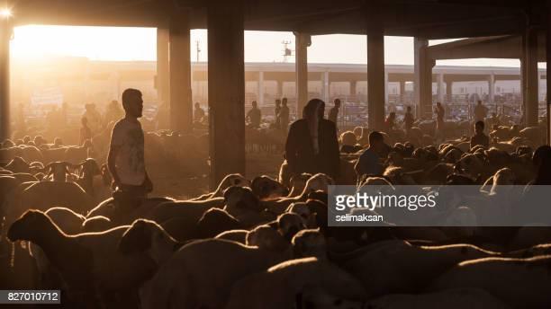 silhouette der auktion viehmarkt an der unten im vorabend des eid al-adha - eid al adha stock-fotos und bilder