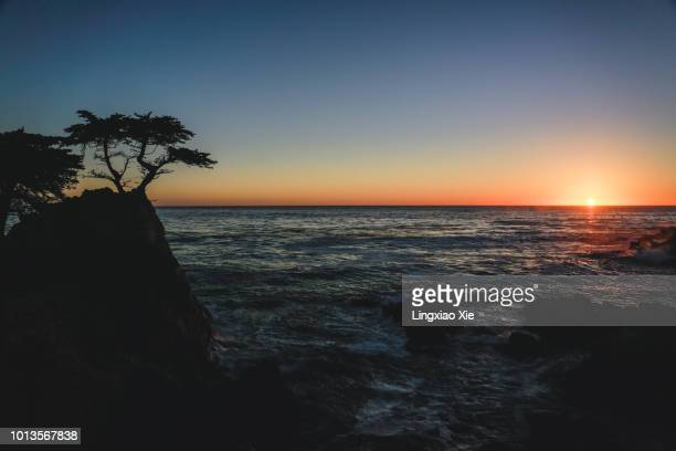 silhouette of lone cypress at sunset on the coast, 17-mile drive, monterey, california - pebble beach california stockfoto's en -beelden