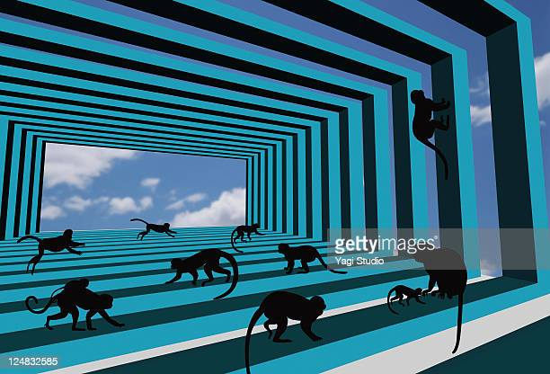 Silhouette of monkeys playing in a strange space