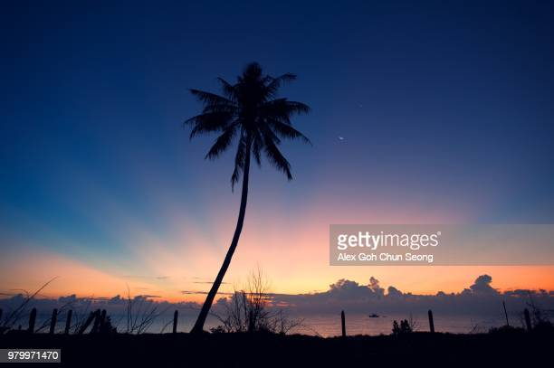 silhouette of palm tree against sky, kuala terengganu, terengganu, malaysia - terengganu stock pictures, royalty-free photos & images