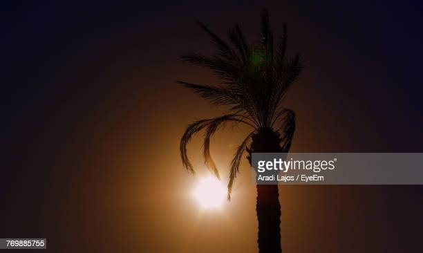 Silhouette Of Palm Tree Against Sunset