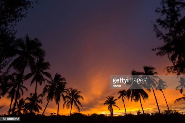 Silhouette of palm tree at beautiful and colorful sunset.