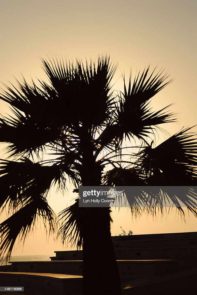 Silhouette of palm tree at sunset : Stock Photo