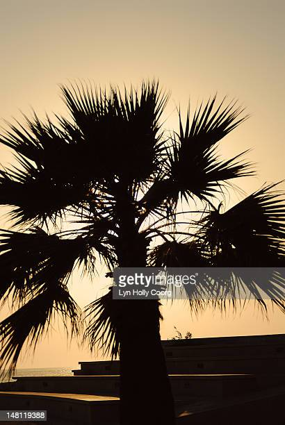 silhouette of palm tree at sunset - lyn holly coorg imagens e fotografias de stock