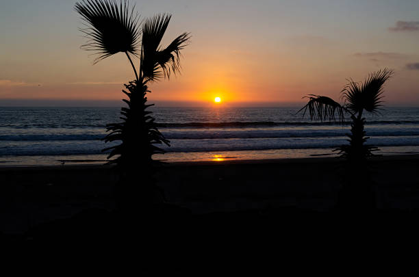 Silhouette of palm tree by sea against sky during sunset,La Serena,Coquimbo,Chile