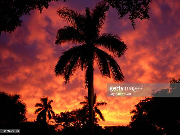 silhouette of palm trees against dramatic sky - coral springs stock pictures, royalty-free photos & images