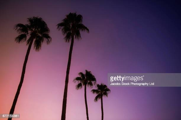 Silhouette of palm trees against purple night sky