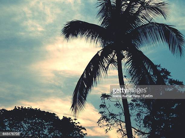 Silhouette Of Palm Trees Against Sky