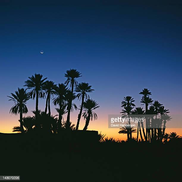 silhouette of palm trees against sunset sky - merzouga stock pictures, royalty-free photos & images