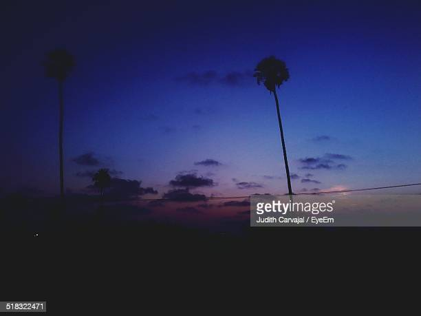 silhouette of palm trees at dusk - carvajal stock photos and pictures