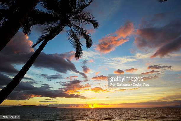 Silhouette of palm trees at sunset at Keawekapu Beach