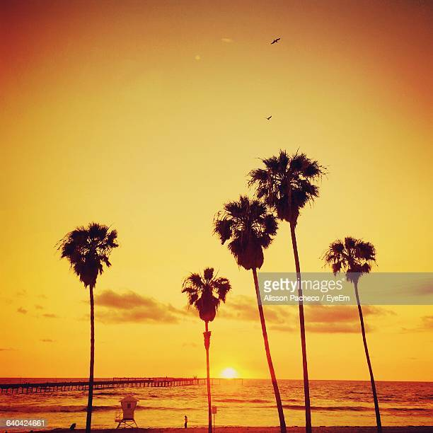 silhouette of palm trees at sunset - alisson stock pictures, royalty-free photos & images