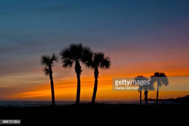 silhouette of palm trees, crescent beach, siesta key, sarasota, florida, usa - siesta key 個照片及圖片檔