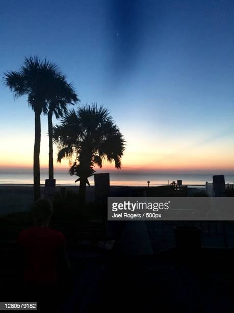 silhouette of palm trees on beach against sky during sunset - joel rogers stock pictures, royalty-free photos & images