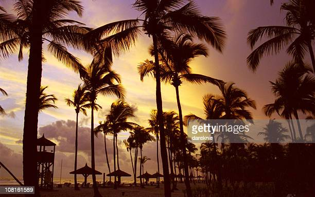Silhouette of Palm Trees on Beach, Sunset at Ivory Coast