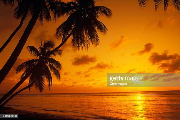 silhouette of palm trees on the beach, caribbean - tropical sunsets stock pictures, royalty-free photos & images