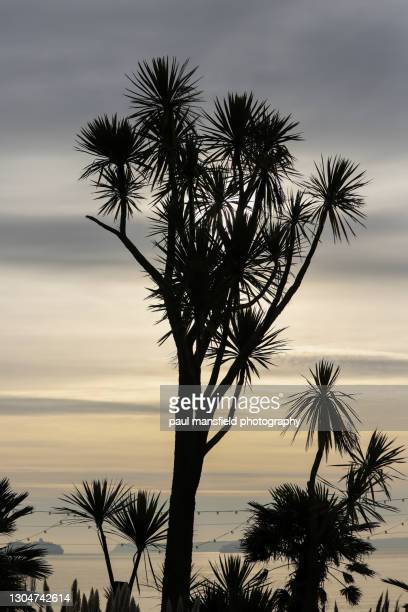 silhouette of palm trees - passenger craft stock pictures, royalty-free photos & images