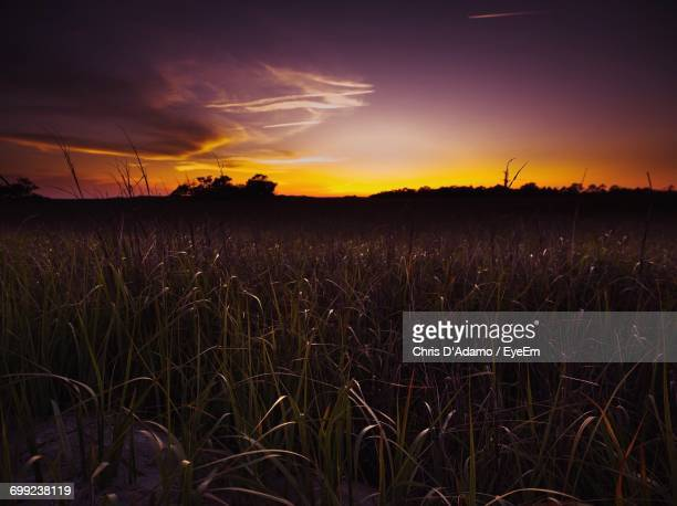 silhouette of plants on field against cloudy sky - adamo photos et images de collection