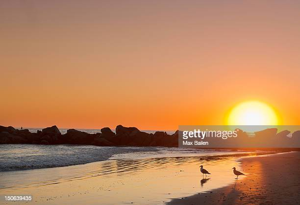 Silhouette of rocks on beach at sunset