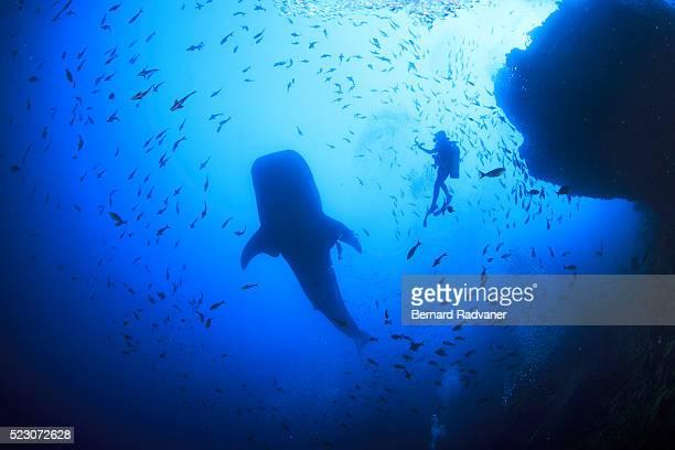 Silhouette of scuba diver and whale shark, Cocos Island National Park, Puntarenas Province, Costa Rica