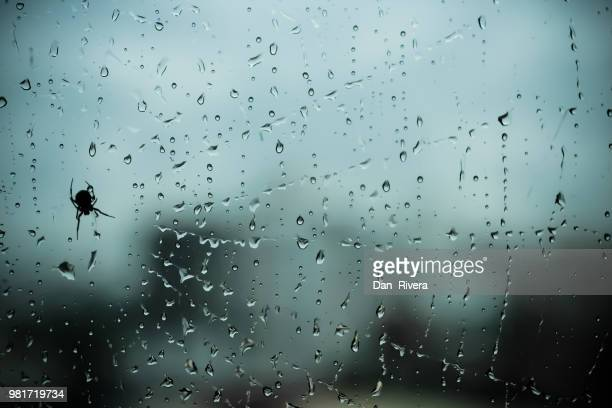 silhouette of spider in wet window, quezon city, philippines - aranha imagens e fotografias de stock