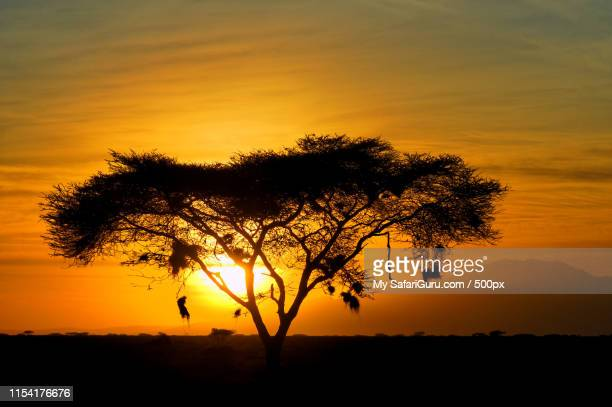 silhouette of tree against sun rising overngorongoro conservation area - ngorongoro conservation area stock pictures, royalty-free photos & images