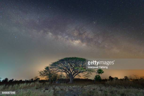 Silhouette of tree and beautiful milkyway