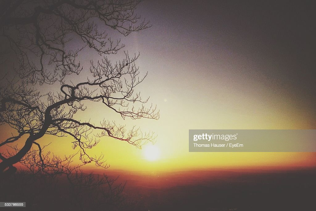 Silhouette Of Tree At Sunset : Foto stock